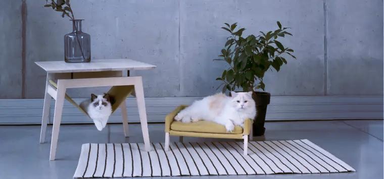 Minimalist pet furniture