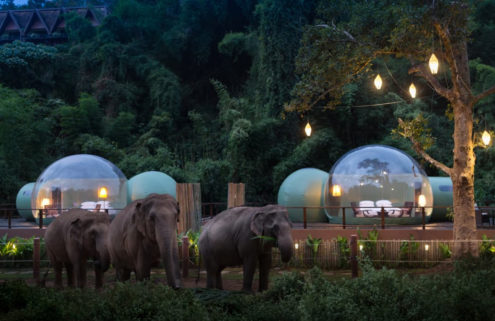 Jungle Bubbles let you sleep next to elephants in Thailand's Chiang Rai