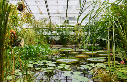 Inside the Oxford Botanic Glasshouses – ancient botany in the historic city