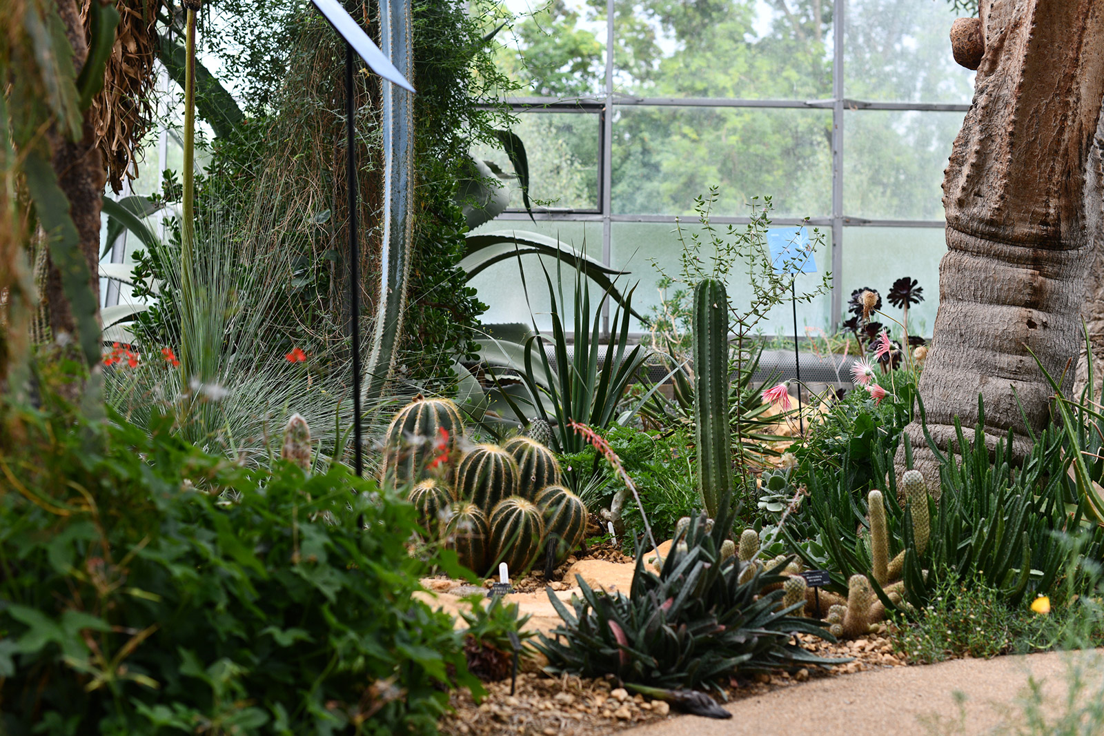 Cacti and succulents planted inside the 'desert' glasshouses at Oxford Botanic Garden and Arboretum
