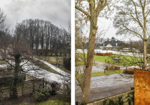 Views of the museum grounds and forest which surround the Holte property
