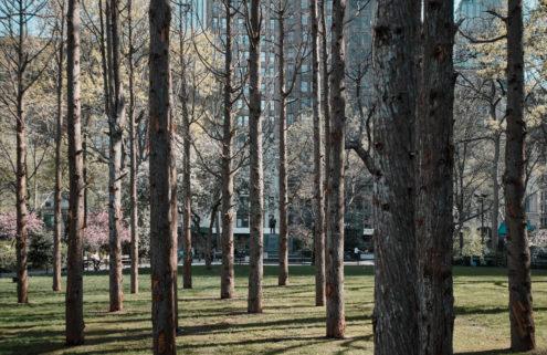 A 'ghost forest' has sprung up in Manhattan