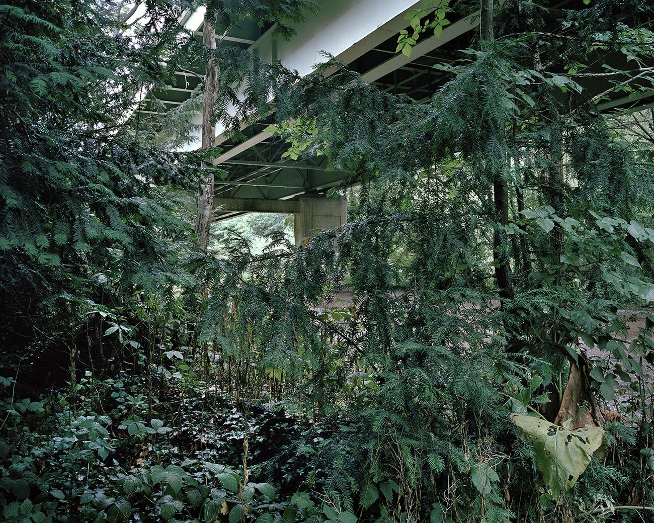 Concrete and wild woodland converge